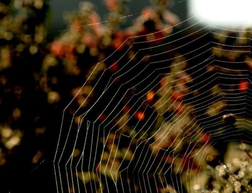 Conte cosmogonique : Pourquoi l'escargot porte-t-il sa maison sur son dos et l'araignée a-t-elle 8 pattes ?