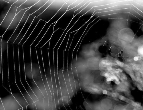 Araignée et Couturière