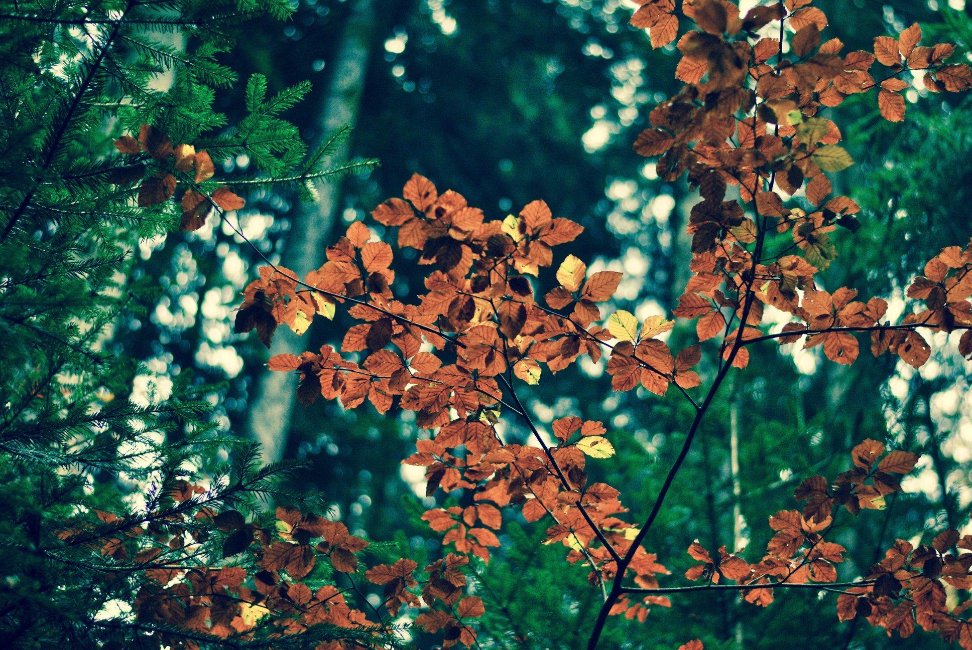 Noisetiers d'automne